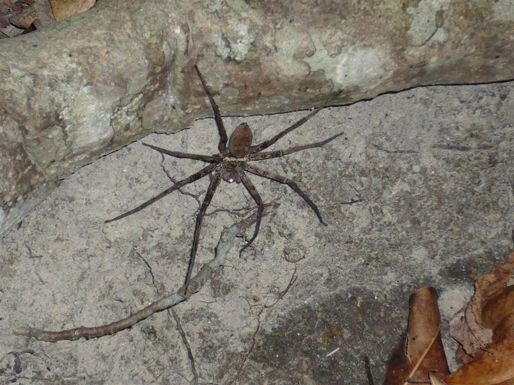 pavouci byli všude
