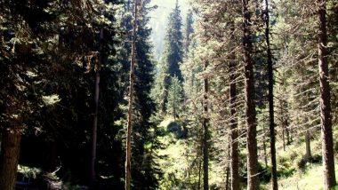 lesní část cesty na vrchol