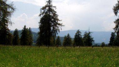 Planina Saltner