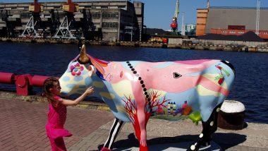 jedna z místních barevných krav