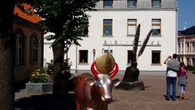 další kráva na náměstí