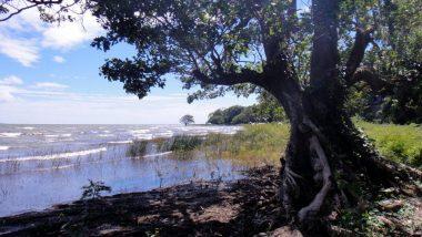 pobřeží jezera Nikaragua