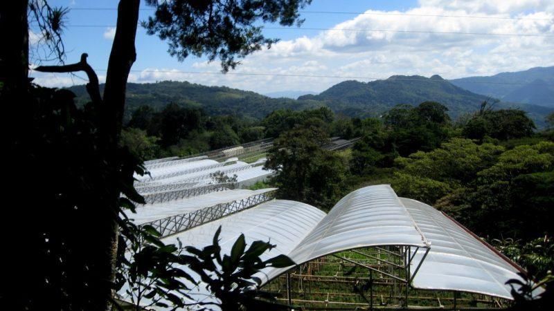 skleníky a výhled na kopcovité okolí
