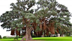 Coromandel a stromy