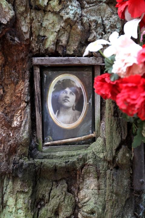 Památný strom s fotografiemi Emy Destinové