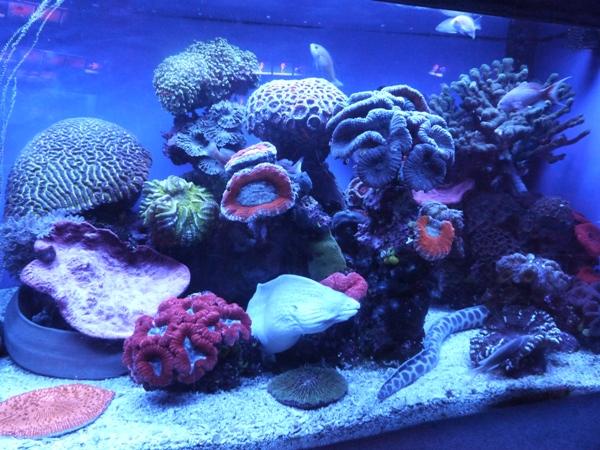 Eilat-oceanarium