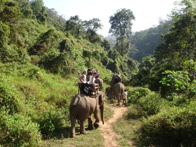 na slonech