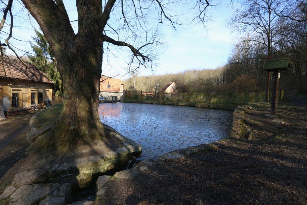 rybník Koda