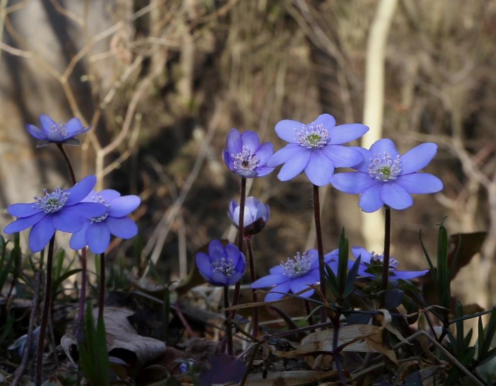 květena v přírodní rezervaci Koda