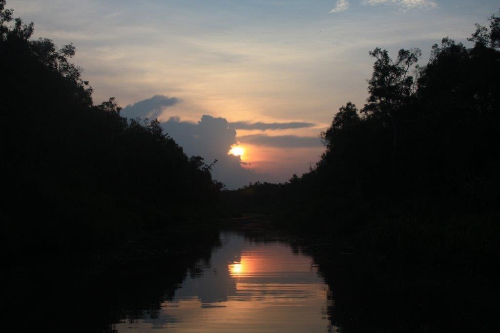 NP Tanjung Puting (15)