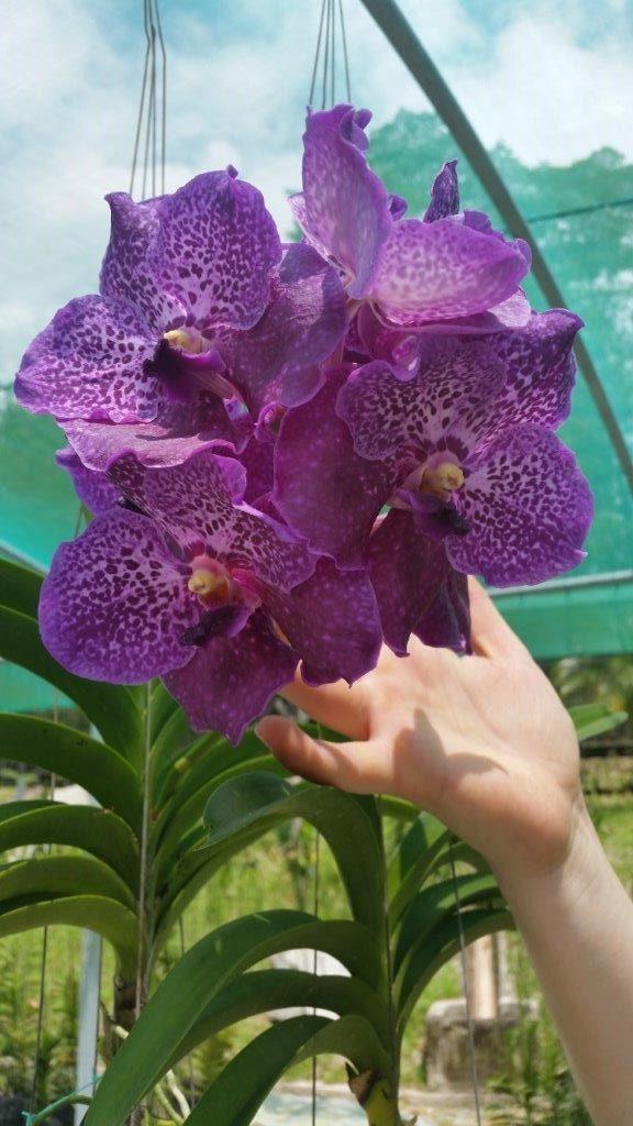 Orchideová zahrada