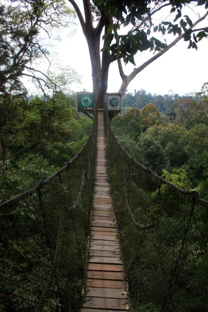 visutý most Borneo (5)