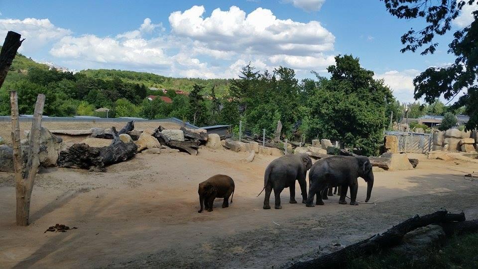 údolí slonů Praha