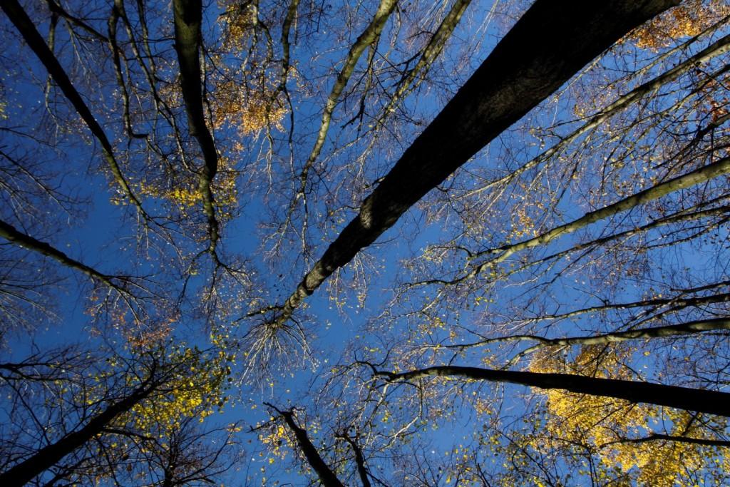 procházka lesem na Babě