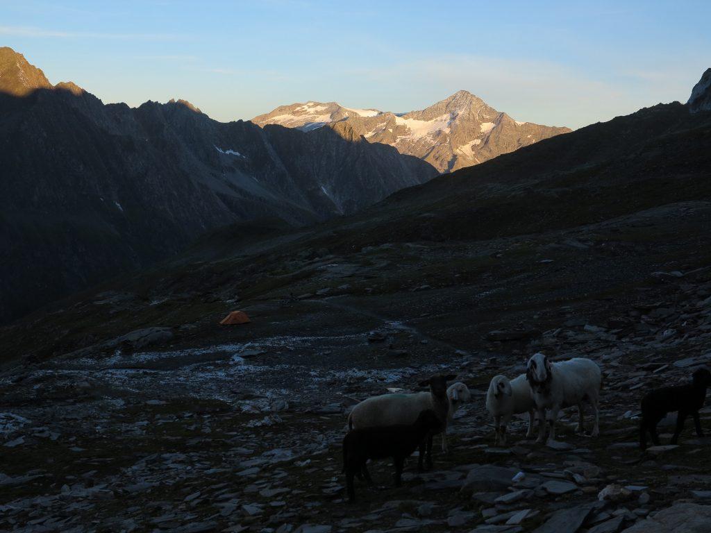 Východ slunce, ovce a náš stan