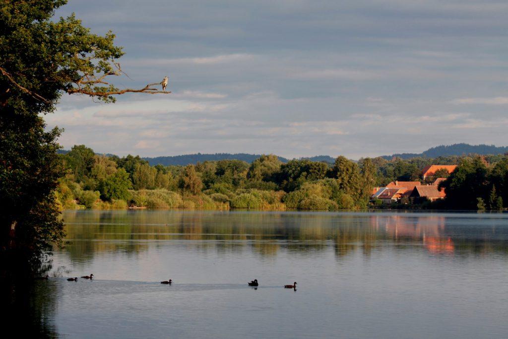 Dolejší rybník Tchořovice