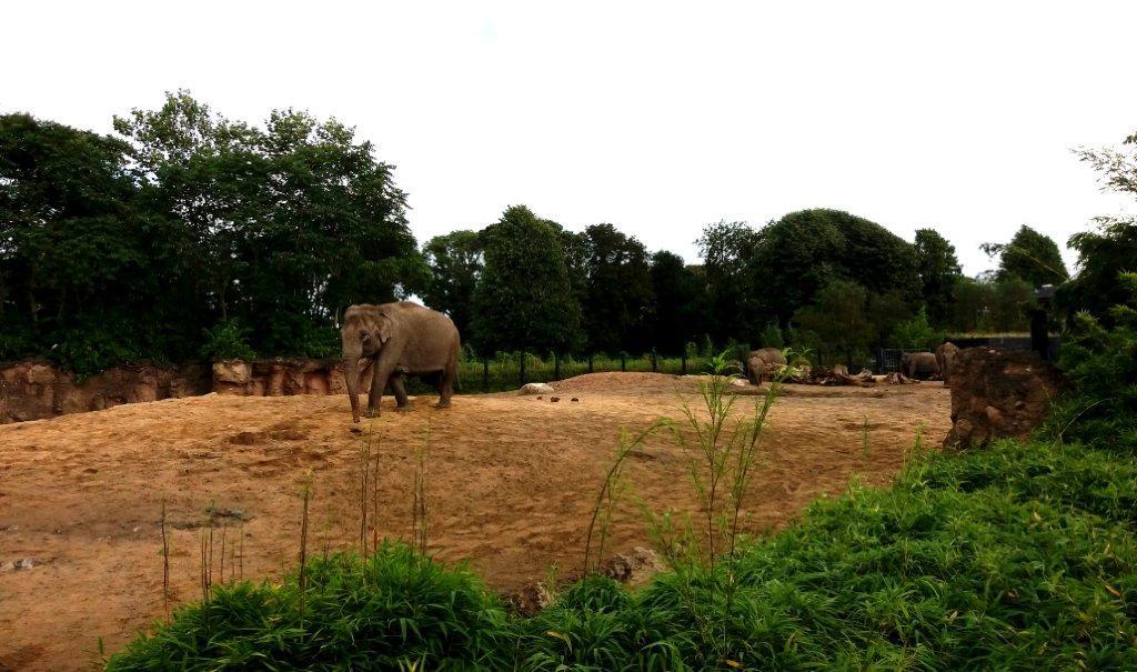 sloní výběh