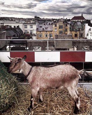 kozy na tsřeše Lucerny