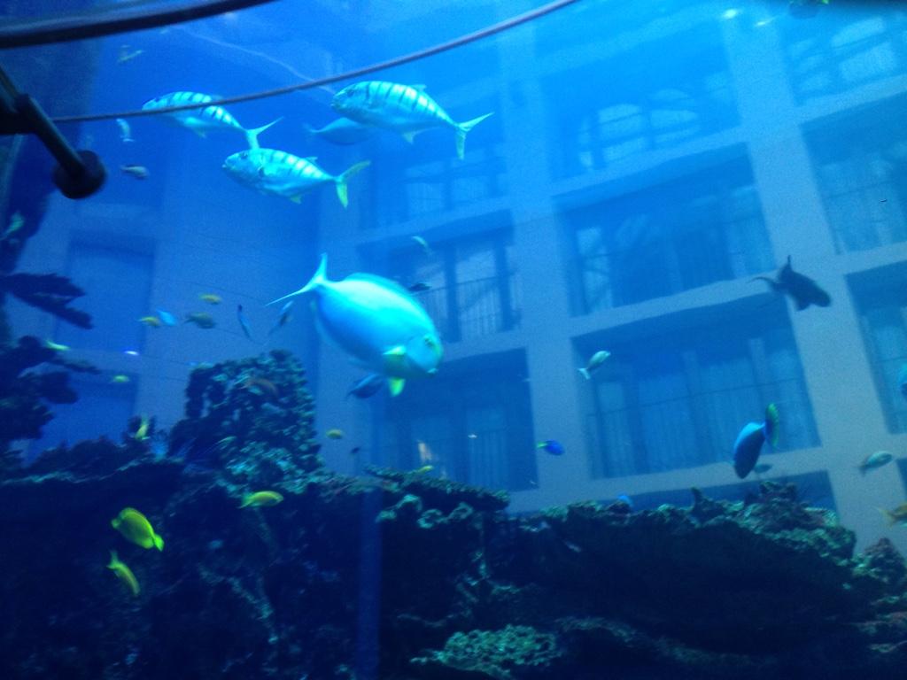 Sea Life - AquaDom
