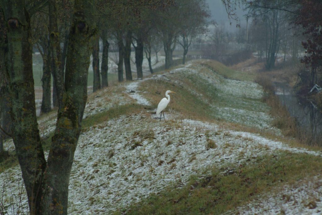 Ptačí ráj na Dunaji, Foto Michael Körner