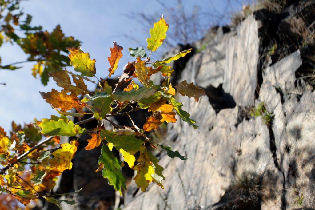 skalní masiv Vrané nad Vltavou