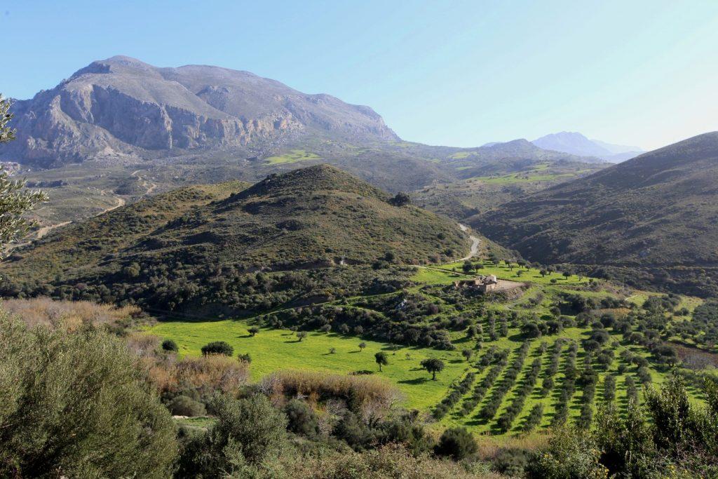 olivovníky na cestě