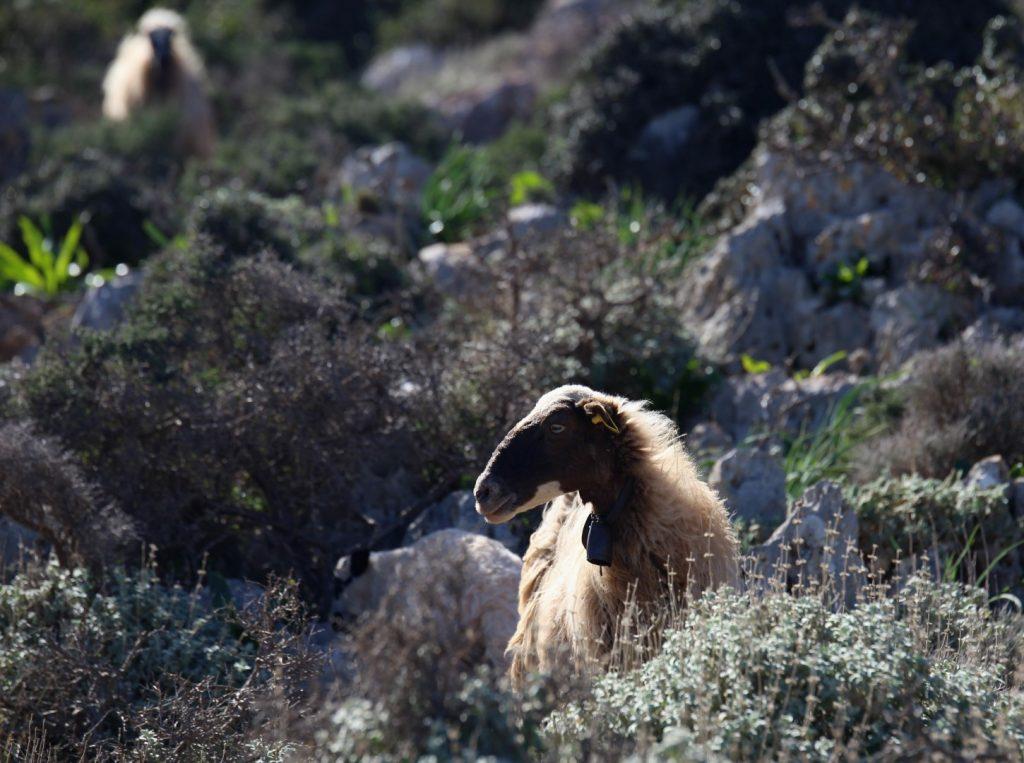 poloostrov Rodopou, Kréta