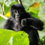 Uganda, Keňa - leden 2018 - 3.část