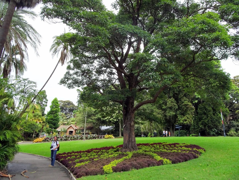 Austr lie 7 st kam se for Landscape gardeners sydney